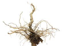 plant-root