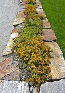 stone-wall-plant-2
